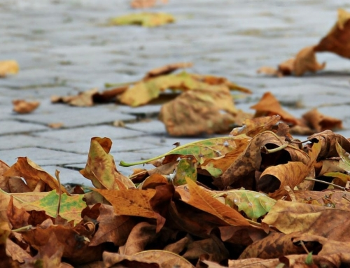 Top Tips for Conducting an Autumn Property Inspection